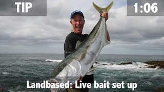 LANDBASED LIVE BAIT SETUP