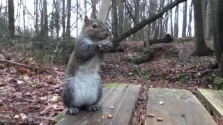 Squirrel: Grabby nervous