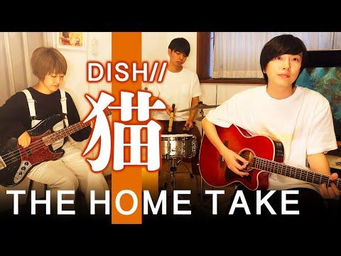 【THE FIRST TAKE風】猫 - DISH//【歌ってみた】(作詞作曲あいみょん 歌詞付)