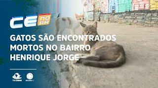 Gatos são encontrados mortos no bairro Henrique Jorge