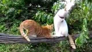 かご猫17