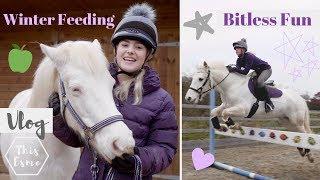 Vlog   Winter Feeding, Mickey walks, Bitless fun + Hay Steamer   This Esme