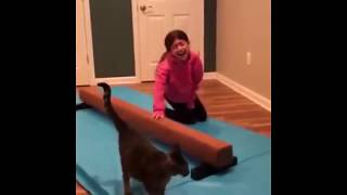 MOST FUNNY CATS AND DOGS COMPILATIONS.....2019
