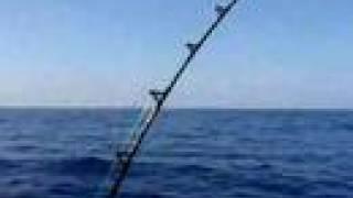 Pescar un pez vela