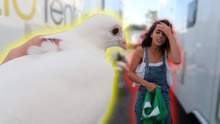 LIVE BIRD PRANK ON MY CASTMATES! **freakout**
