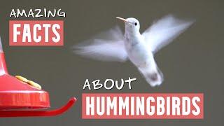 Hummingbirds Ultra Slow Motion - Amazing Facts, Full HD