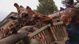 FORGET CATS! Funny KIDS vs ZOO ANIMALS are WAY FUNNIER!
