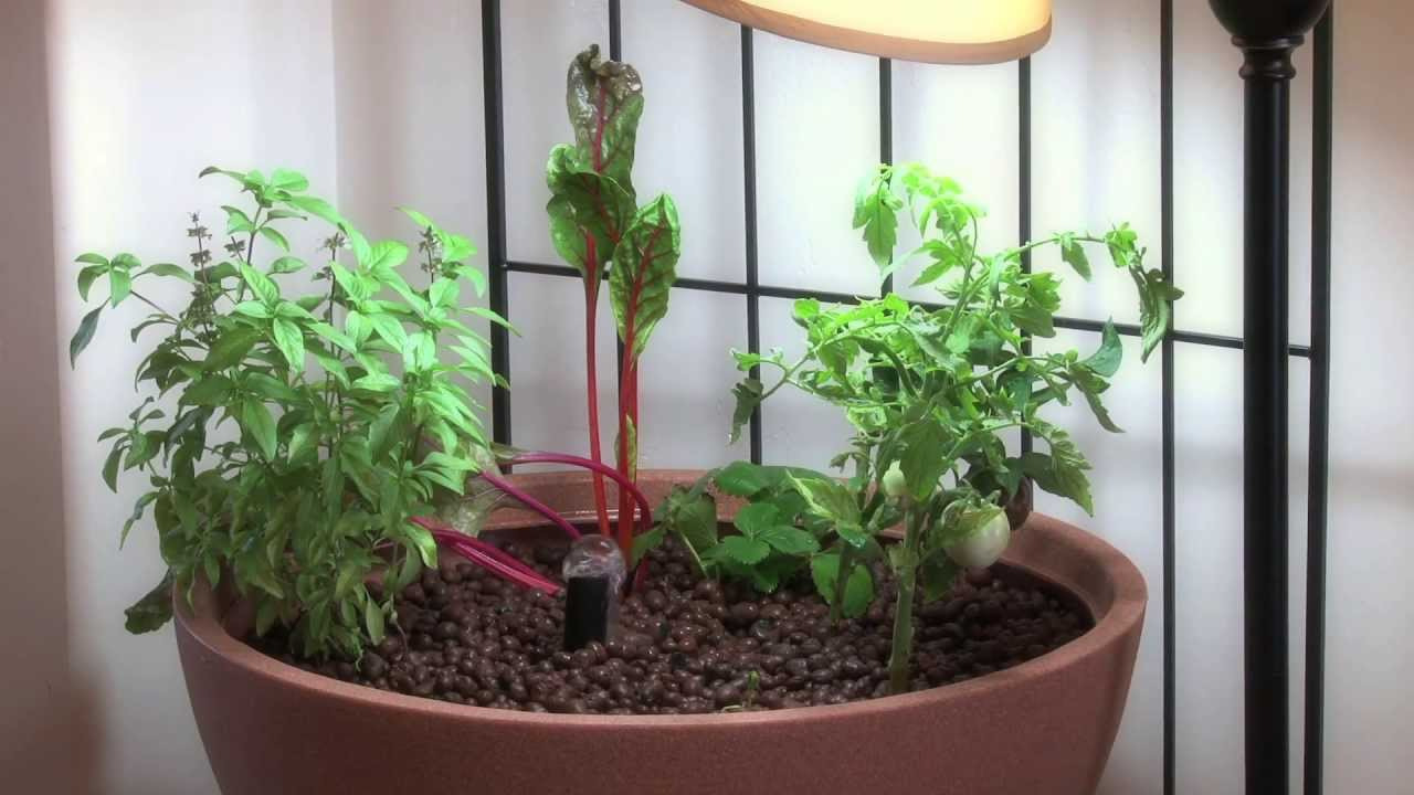 Do It Yourself Home Design: Small Aquaponic Indoor Or Patio Mini Garden