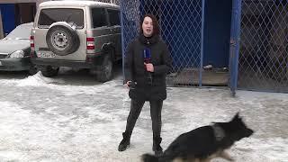 Служебная собака помогла раскрыть крупную кражу