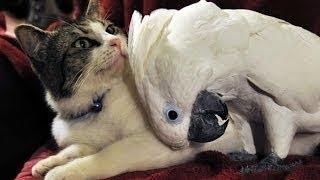 Katze vs Papagei Lustige Video Erstellung [HD video APRIL 2014]