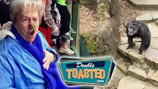 MONKEY THROWS POOP AT GRANDMA VIDEO - Double Toasted Funny Podcast Highlight