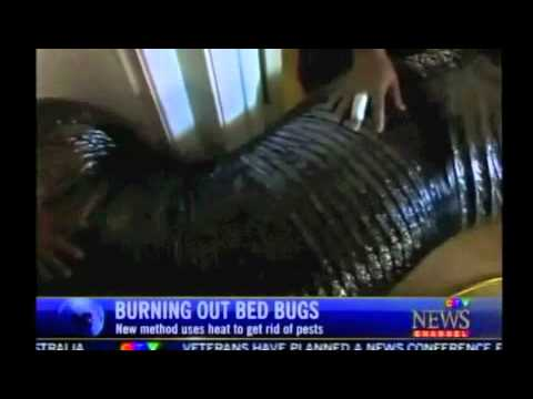 Bed Bugs Toronto