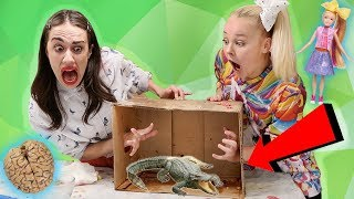 WHAT'S IN THE BOX CHALLENGE W/ MIRANDA SINGS!! *live animals*