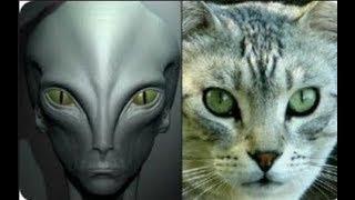 Preparándose para el primer contacto físico con los extraterrestres (insctrucciones)