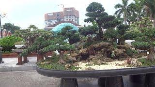 Tác phẩm của Lâm Ngọc Vinh. Những đồi tùng tuyệt đẹp - beautiful bonsai hills