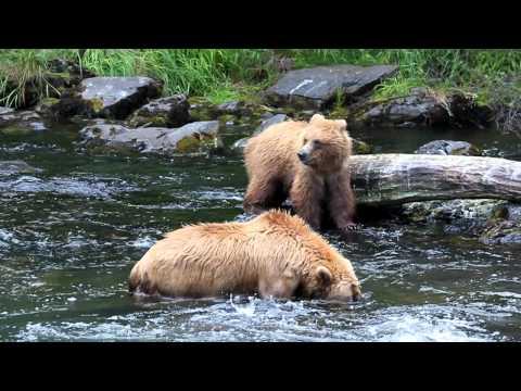 bear cub scratching his bum