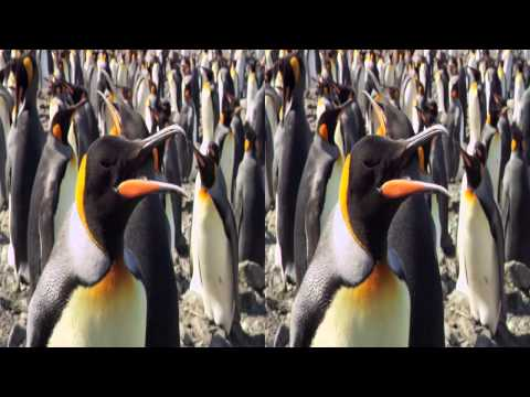 ANTEPRIMA: THE PENGUIN KING 3D - IN MARCIA PER LA VITA su Sky 3D Italia