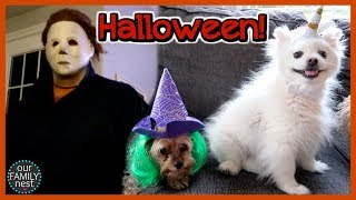 HALLOWEEN COSTUMES! DON'T BE SCARED!!