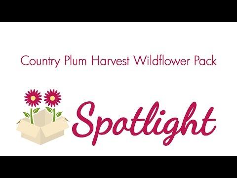 Blooms Spotlight- Country Plum Harvest Wildflower Pack