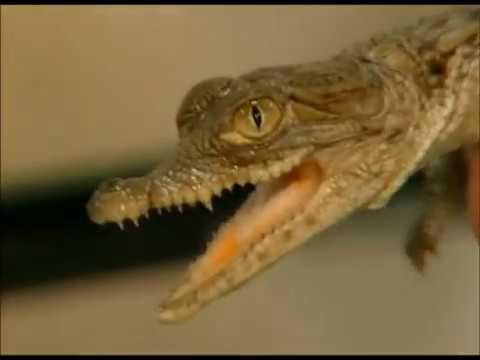 Bill Nye the Science Guy - S02E18 Reptiles