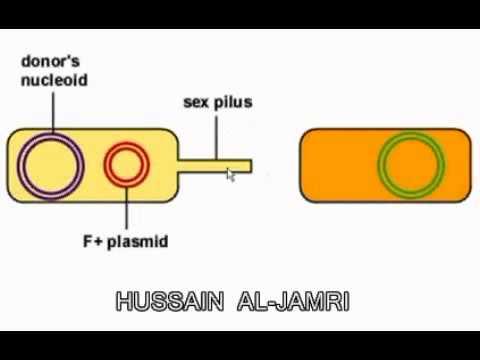 Bacteria and viruses البكتيريا والفيروسات