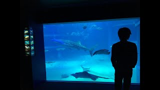 Fall asleep in Osaka Aquarium with meditation music
