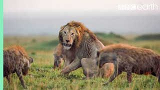 10 TOP Natural History Moments | BBC Earth