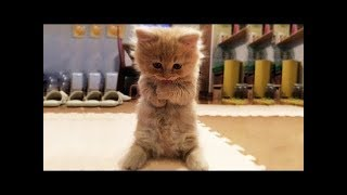 Funny Cats and Dogs Compilation - So Cute