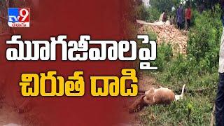 Leopard spotted again in Rajendranagar, kills calf..