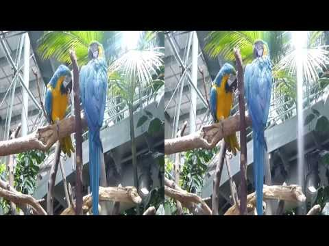 Two Macaws 3D (YT3D:Enable=True)