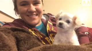 Funniest Confused Pets Compilation 2018