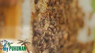 My Puhunan: Honey Bee of Richbee Honeybee Farm