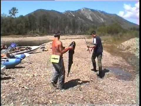 Монгольский таймень. Рыбалка в Монголии.