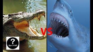 Cá Mập Trắng vs Cá Sấu Nước Mặn, con nào sẽ thắng #4 || Bạn Có Biết?