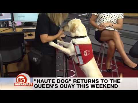 Haute Dog - CP24 Breakfast - August 20, 2016