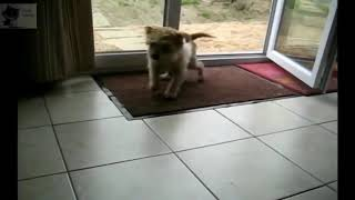 Funny Little Fellas Doing Funny Things 2