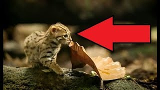 SMALLEST Cats In The World!