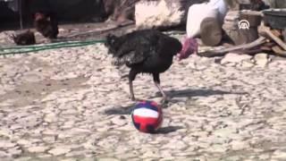 مهارة ديك رومي في كرة القدم