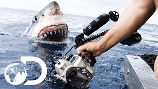 35ft Great White Shark Lurking in 'The Kill Zone' | Super Predator