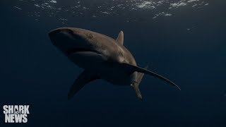 What Do Sharks Do In A Hurricane? | Shark News