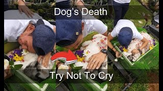 Owner Crying for Dog's Death - Viral Videos 2018 Philippines