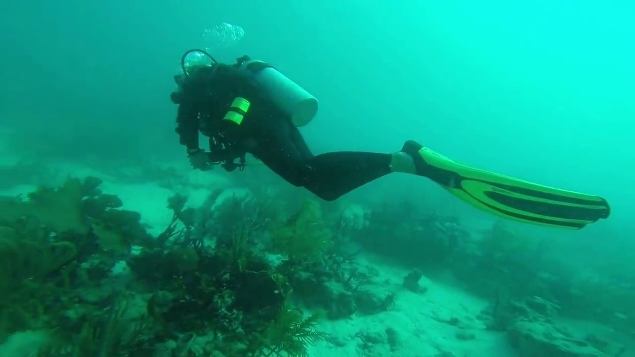 Scuba Diving In St Thomas Coki Beach