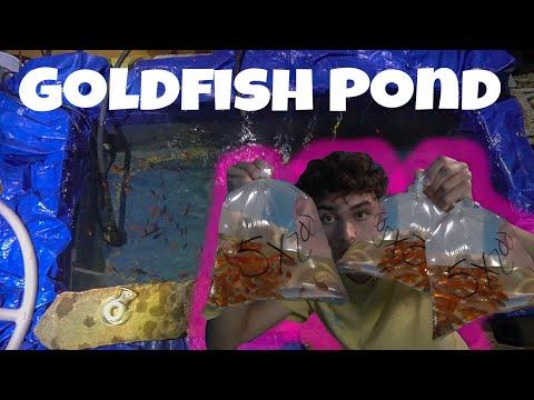 We Made A GOLDFISH POND!