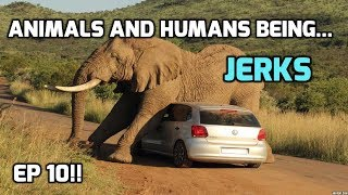 Animals and Humans being jerks (Compilation Extraordinaire) ep. 10!