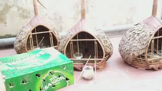 cu bổi bẫy đấu cao  bằng chia sẻ cùng các bạn, sđt 0944114410, facebook : Chim Cảnh Đất Việt