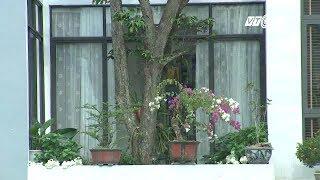(VTC14)_ Kiến trúc độc đáo vườn trong nhà