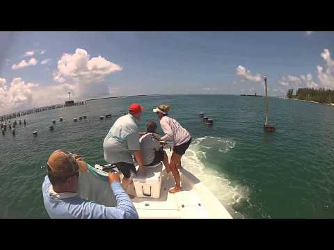 Insane Goliath Grouper battles in Boca Grande!
