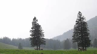 Light Rain on the Mountain Meadows / Nature Sounds (relax, sleep,...)