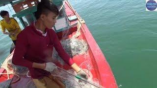 Ra Khơi kéo lưới mực gai ở Kiên Giang/go to sea fishing in Vietnam