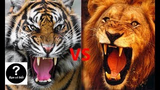 Tiger vs Lion, , who would win #2 -- Did You Know?